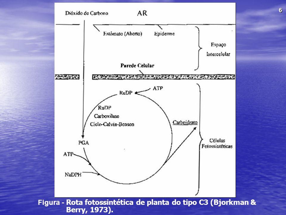 Figura - Rota fotossintética de planta do tipo C3 (Bjorkman & Berry, 1973).