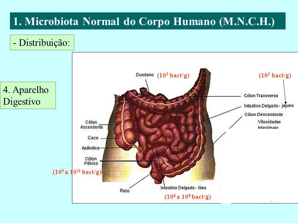 1. Microbiota Normal do Corpo Humano (M.N.C.H.)
