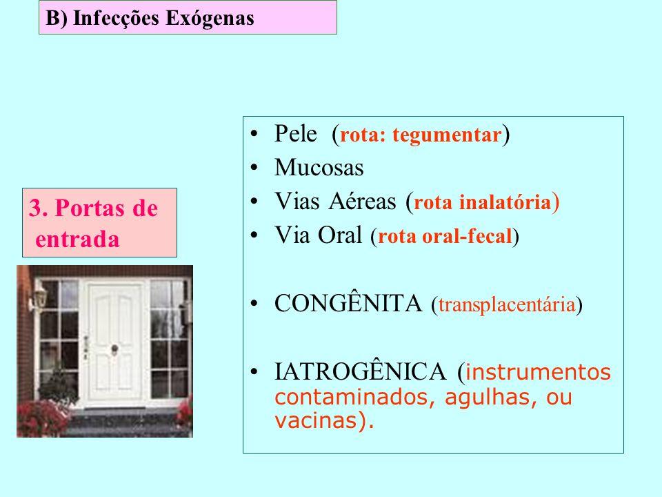 Pele (rota: tegumentar) Mucosas Vias Aéreas (rota inalatória)