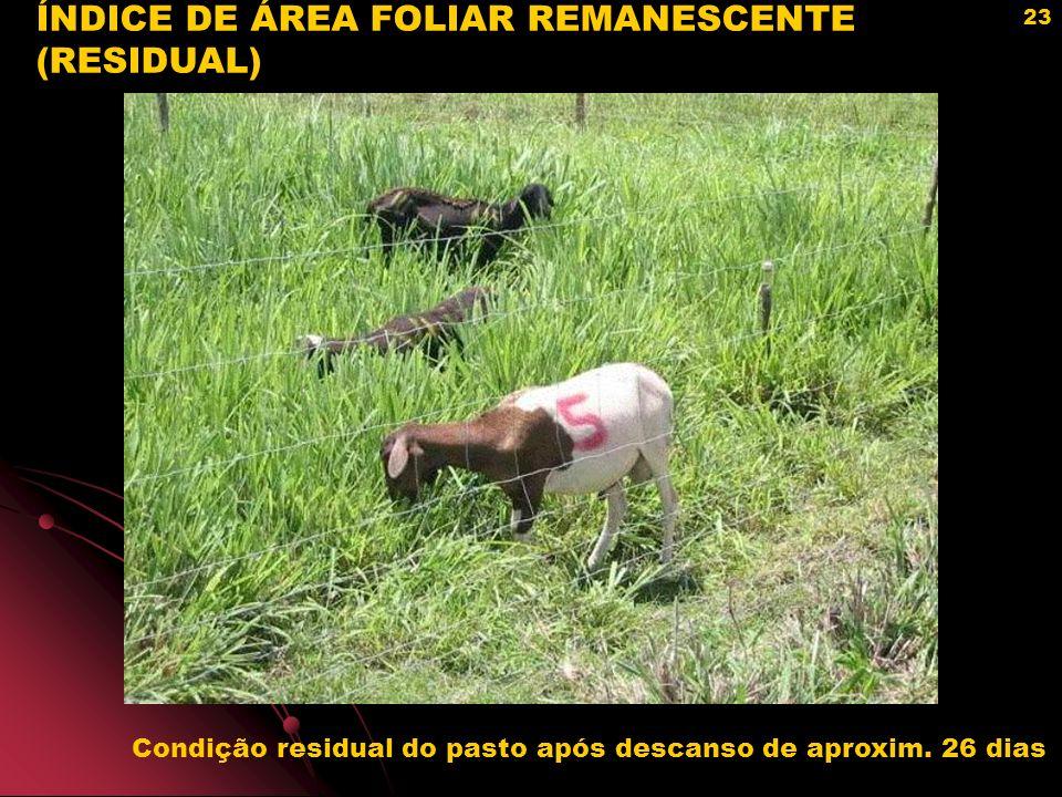 ÍNDICE DE ÁREA FOLIAR REMANESCENTE (RESIDUAL)