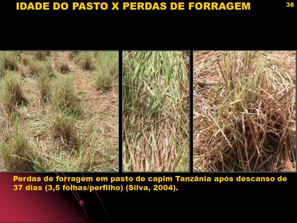 IDADE DO PASTO X PERDAS DE FORRAGEM