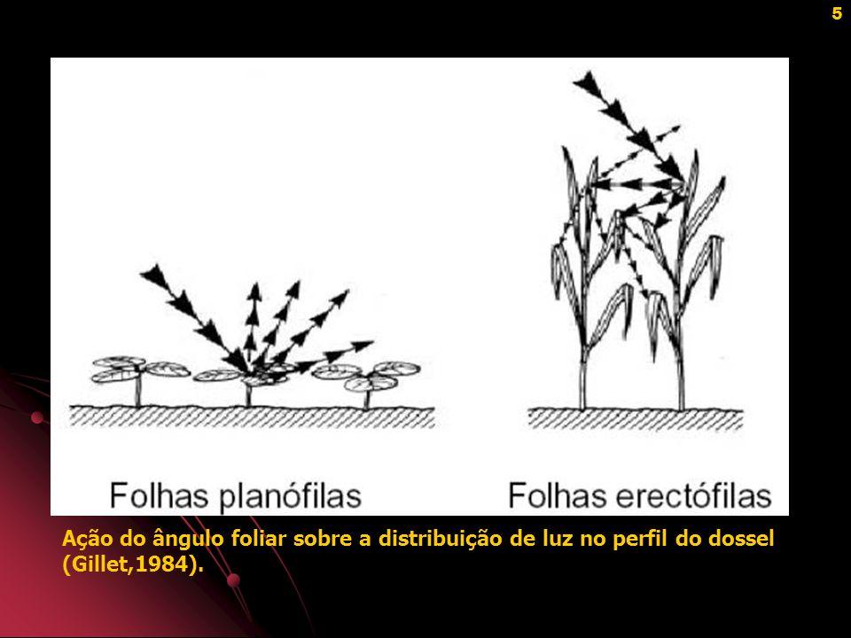Ação do ângulo foliar sobre a distribuição de luz no perfil do dossel (Gillet,1984).