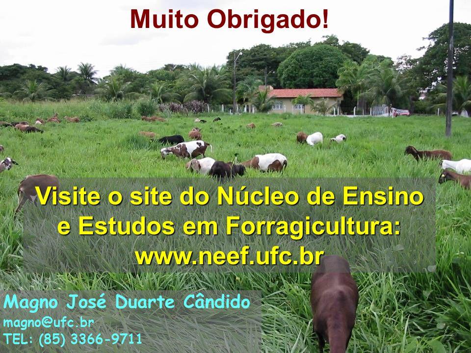 Muito Obrigado! Visite o site do Núcleo de Ensino e Estudos em Forragicultura: www.neef.ufc.br. Magno José Duarte Cândido.
