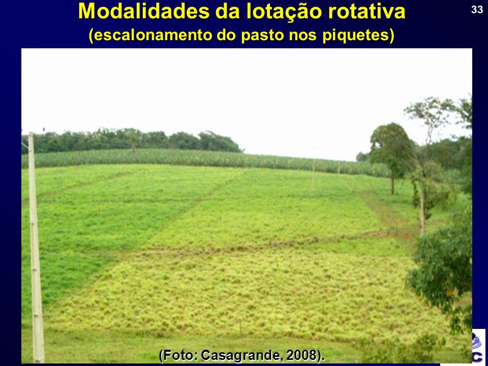 Modalidades da lotação rotativa (escalonamento do pasto nos piquetes)