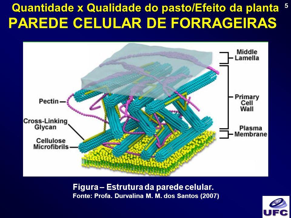 PAREDE CELULAR DE FORRAGEIRAS