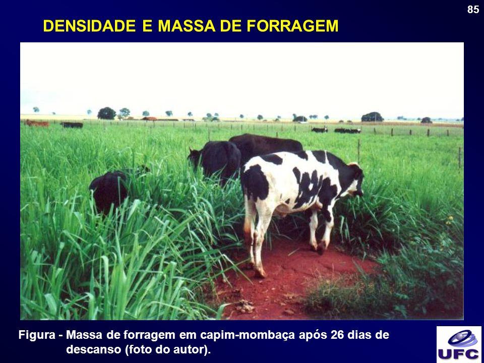 DENSIDADE E MASSA DE FORRAGEM
