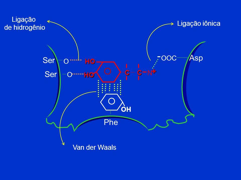- Asp Ser + Ser Phe Ligação de hidrogênio Ligação iônica O OOC HO C N