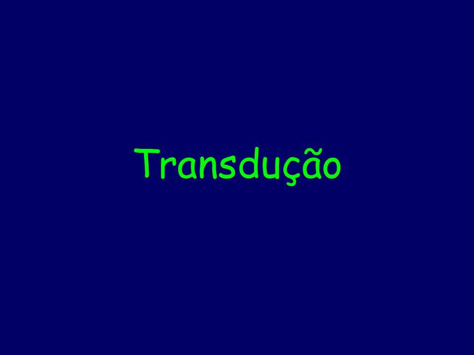 Transdução