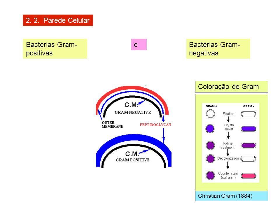 Bactérias Gram-positivas e Bactérias Gram-negativas