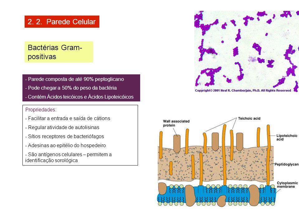 Bactérias Gram-positivas
