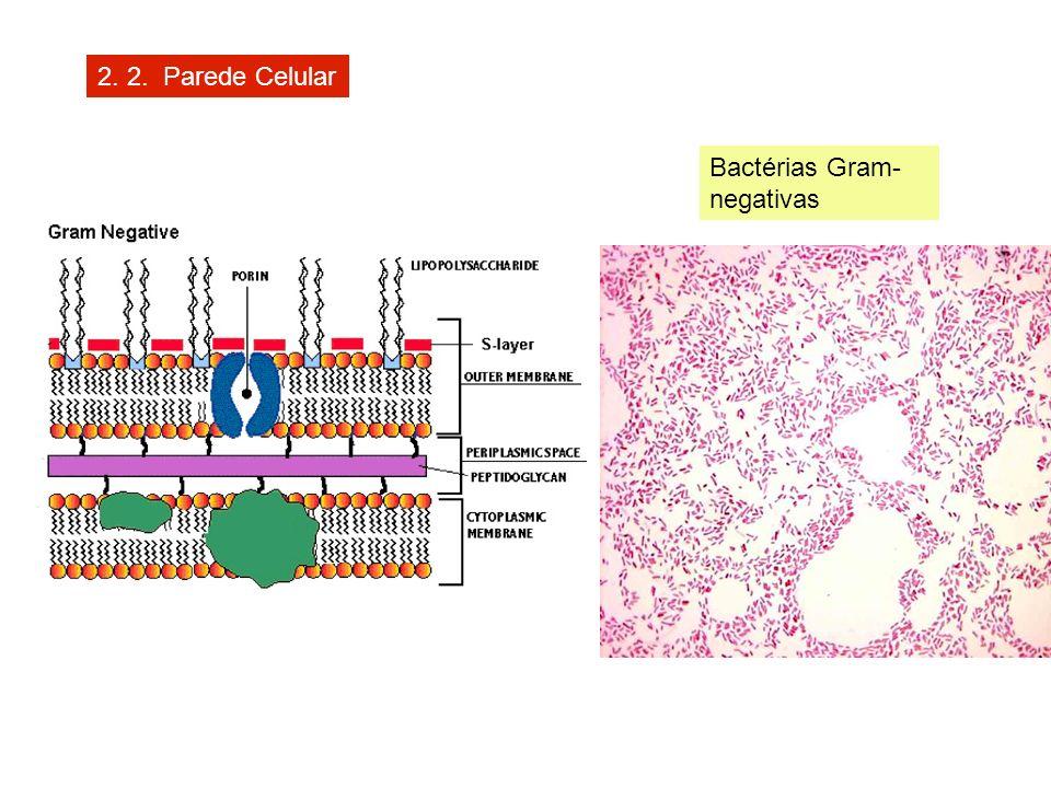2. 2. Parede Celular Bactérias Gram-negativas
