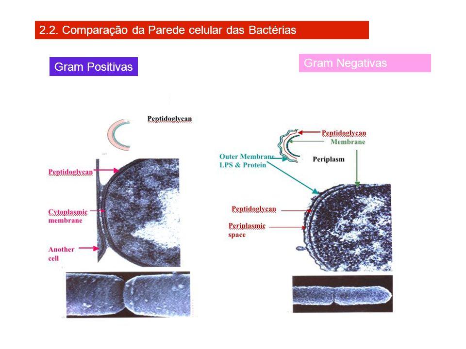 2.2. Comparação da Parede celular das Bactérias