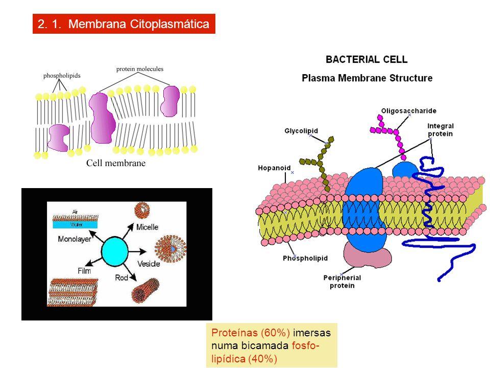 2. 1. Membrana Citoplasmática