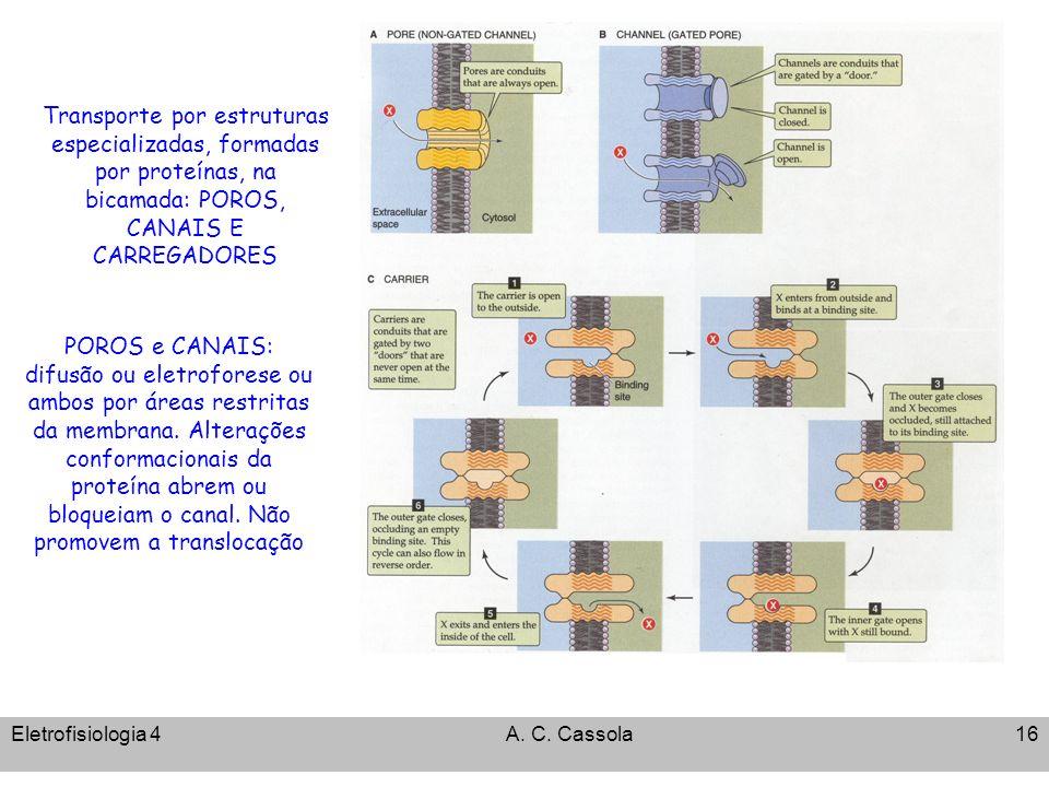 Transporte por estruturas especializadas, formadas por proteínas, na bicamada: POROS, CANAIS E CARREGADORES