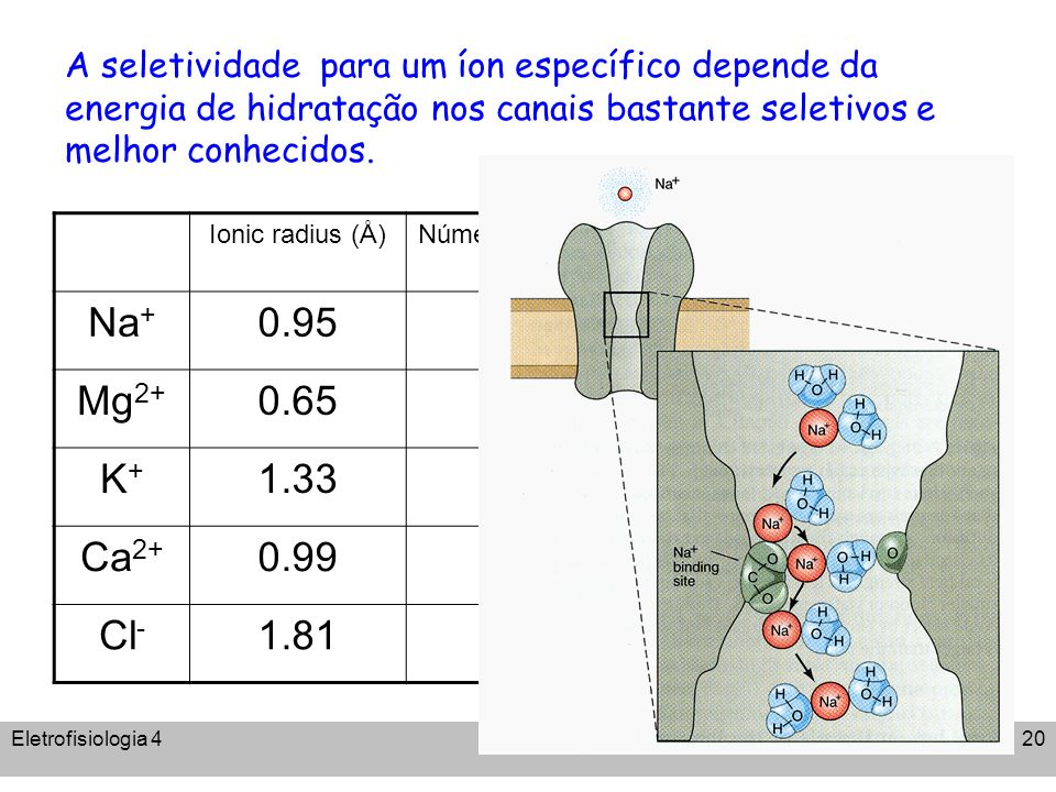 A seletividade para um íon específico depende da energia de hidratação nos canais bastante seletivos e melhor conhecidos.