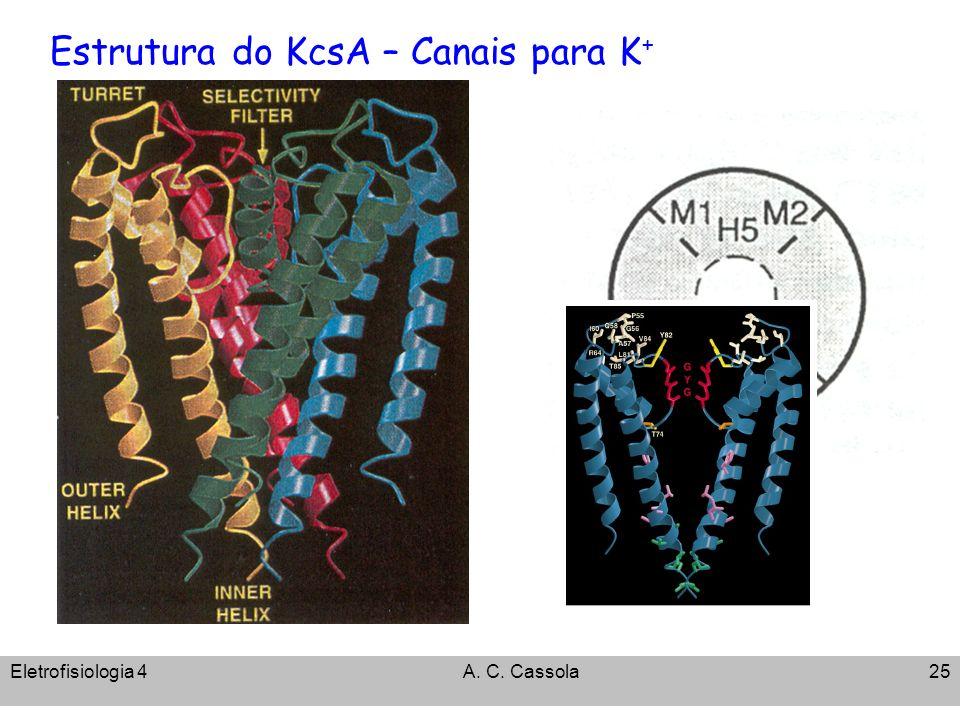 Estrutura do KcsA – Canais para K+