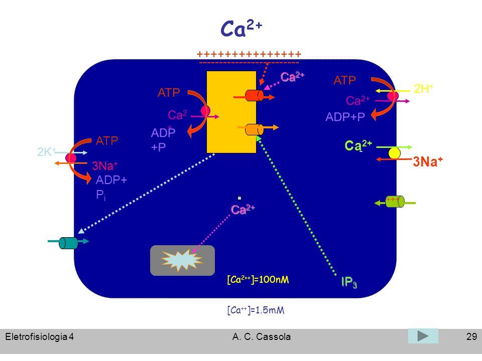 Ca2+ Ca2+ - 3Na+ +++++++++++++++ ------------------------- Ca2+ ATP