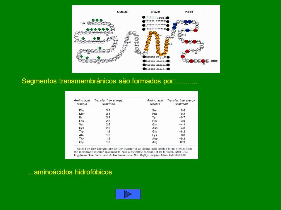 Segmentos transmembrânicos são formados por............