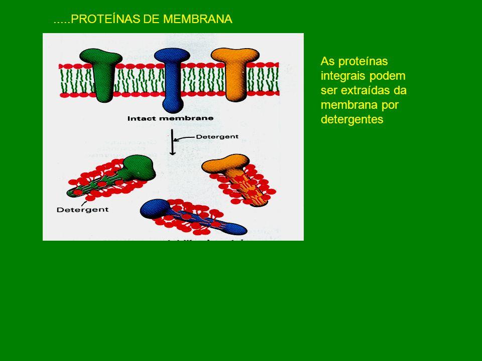 .....PROTEÍNAS DE MEMBRANA As proteínas integrais podem ser extraídas da membrana por detergentes