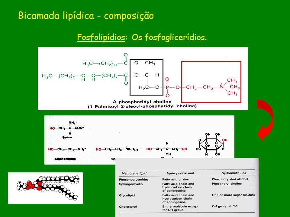 Bicamada lipídica - composição