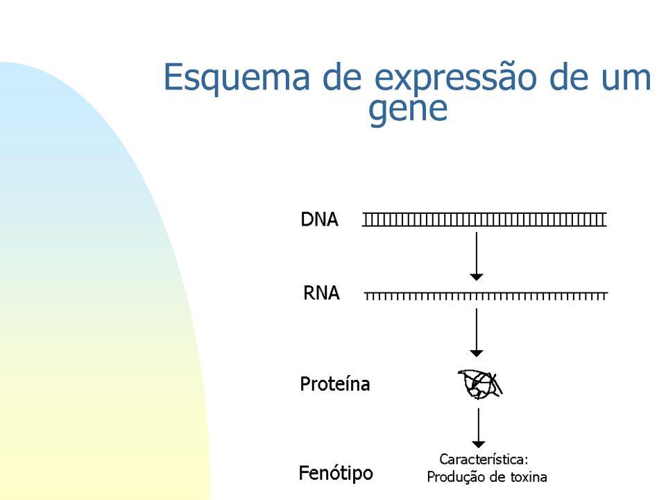 Esquema de expressão de um gene