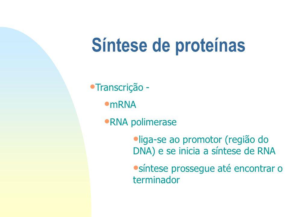 Síntese de proteínas Transcrição - mRNA RNA polimerase