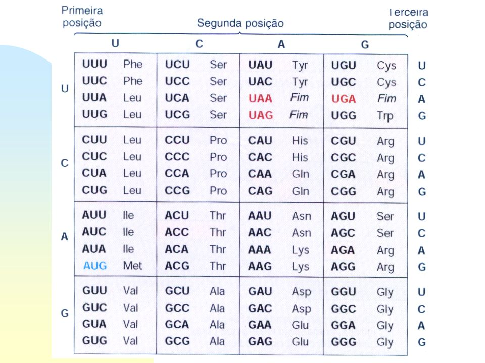 Síntese de proteínas Tradução - o Código genético