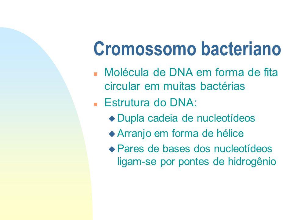 Cromossomo bacteriano