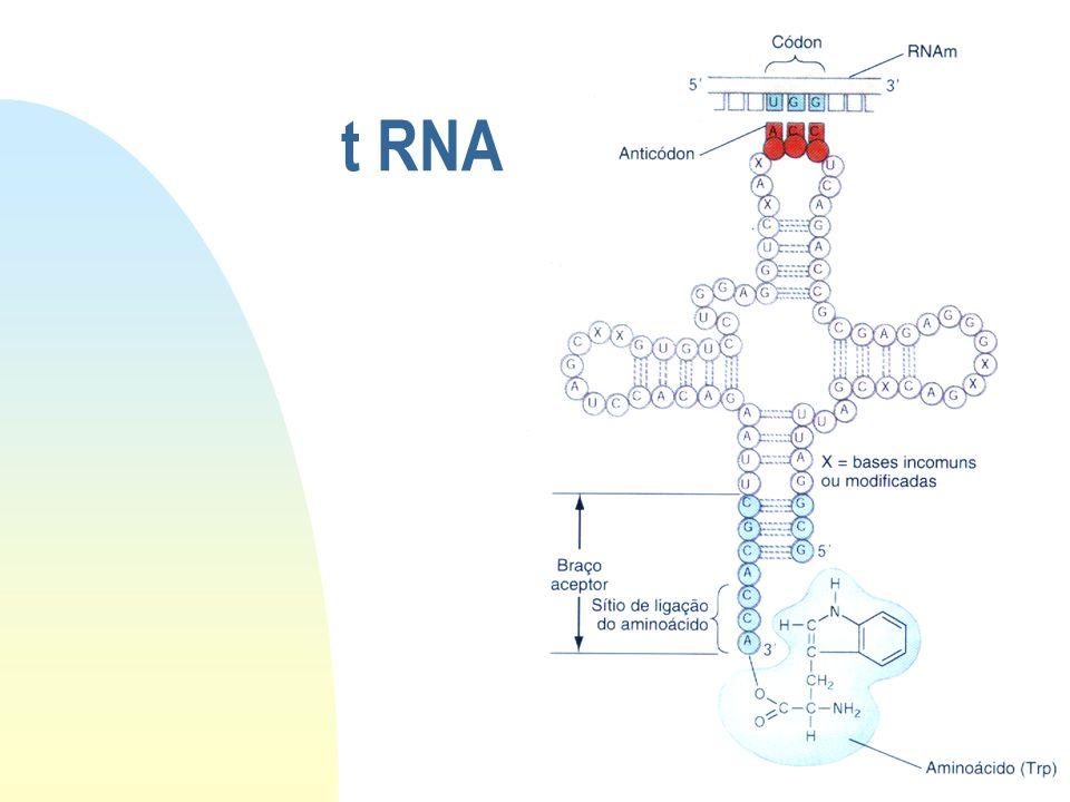 t RNA