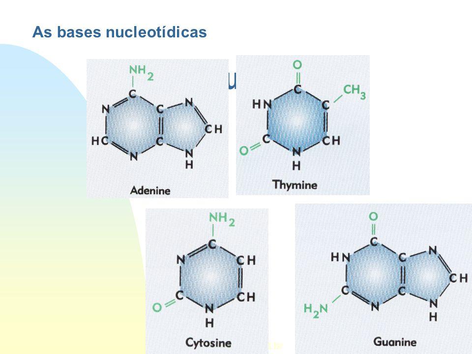 As bases nucleotídicas