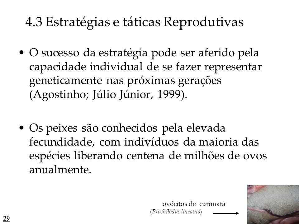 4.3 Estratégias e táticas Reprodutivas