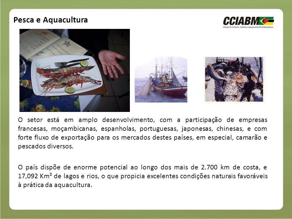 Pesca e Aquacultura