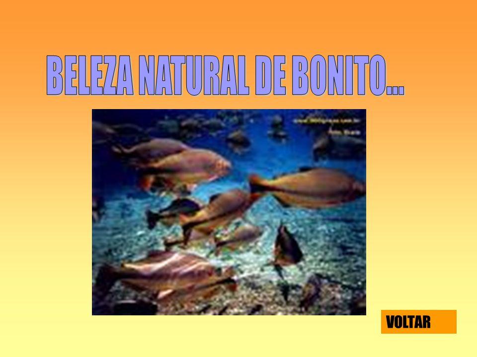 BELEZA NATURAL DE BONITO...