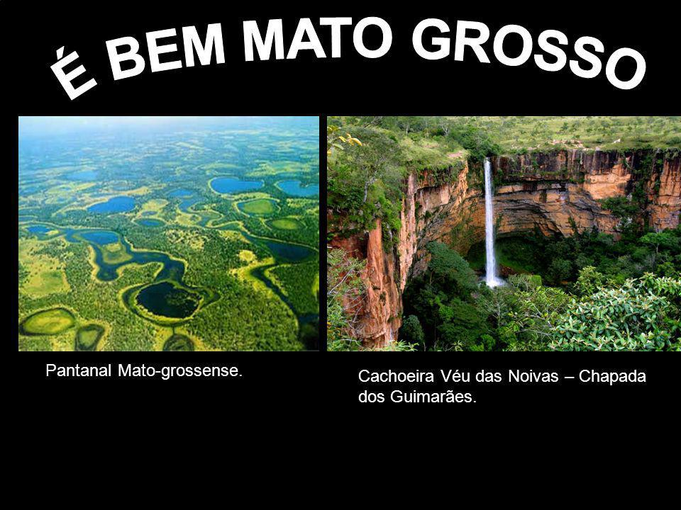 É BEM MATO GROSSO Pantanal Mato-grossense.