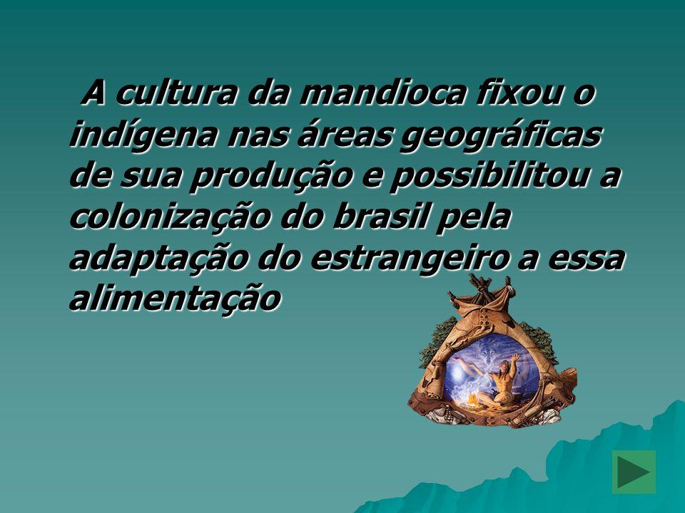 A cultura da mandioca fixou o indígena nas áreas geográficas de sua produção e possibilitou a colonização do brasil pela adaptação do estrangeiro a essa alimentação