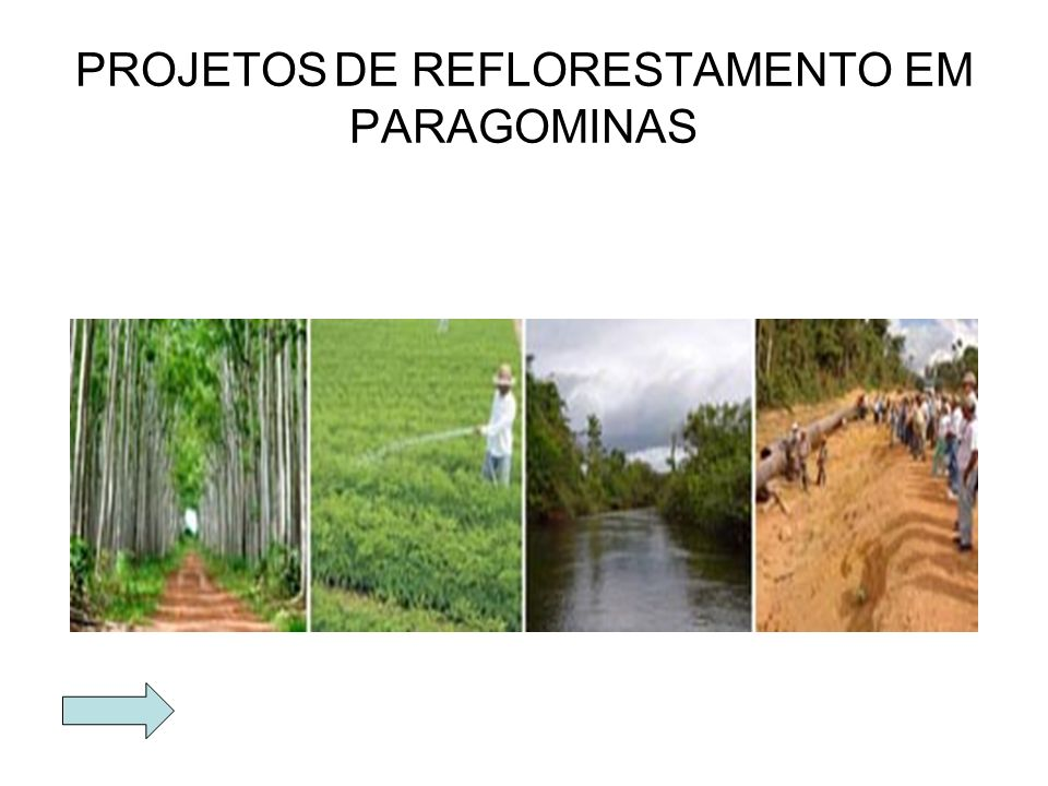 PROJETOS DE REFLORESTAMENTO EM PARAGOMINAS