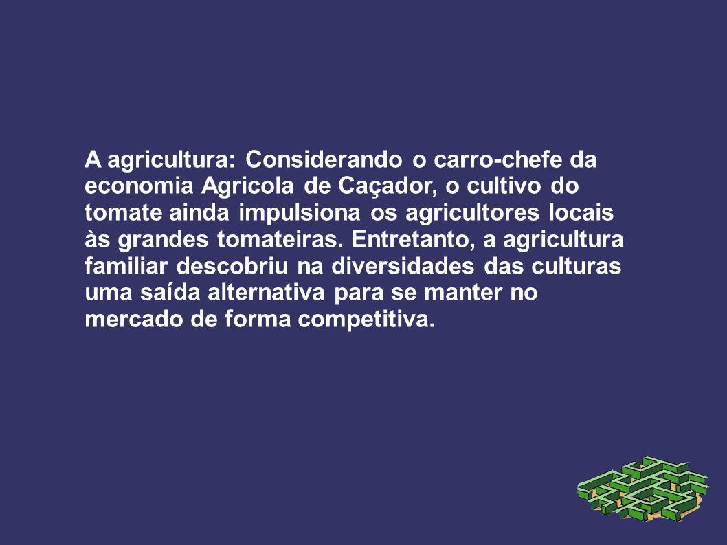A agricultura: Considerando o carro-chefe da economia Agricola de Caçador, o cultivo do tomate ainda impulsiona os agricultores locais às grandes tomateiras.
