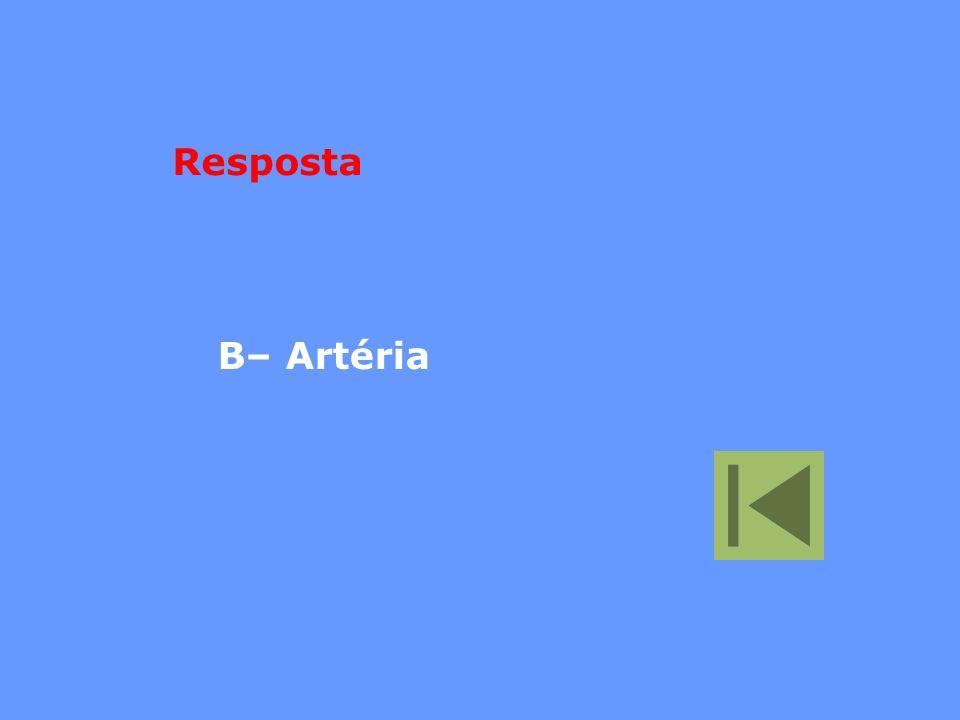 Resposta B– Artéria