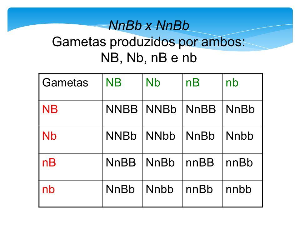 NnBb x NnBb Gametas produzidos por ambos: