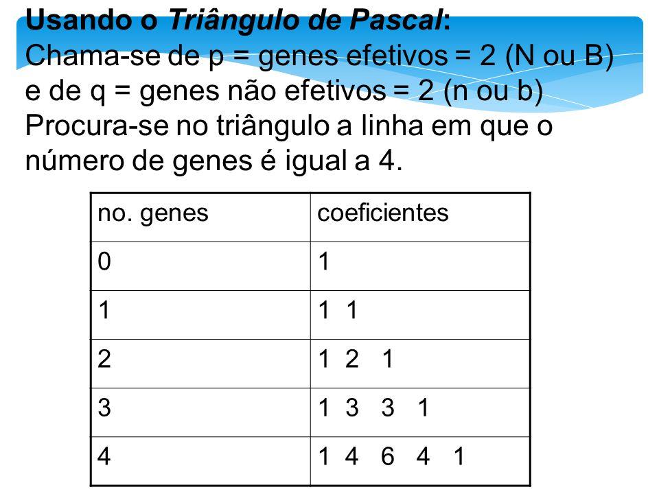 Usando o Triângulo de Pascal: Chama-se de p = genes efetivos = 2 (N ou B) e de q = genes não efetivos = 2 (n ou b) Procura-se no triângulo a linha em que o número de genes é igual a 4.