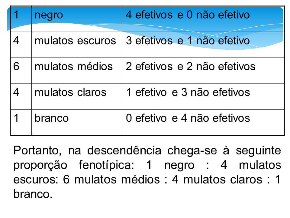 1 negro. 4 efetivos e 0 não efetivo. 4. mulatos escuros. 3 efetivos e 1 não efetivo. 6. mulatos médios.