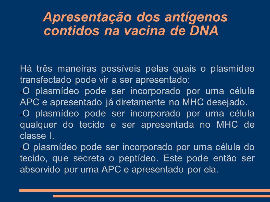 Apresentação dos antígenos contidos na vacina de DNA