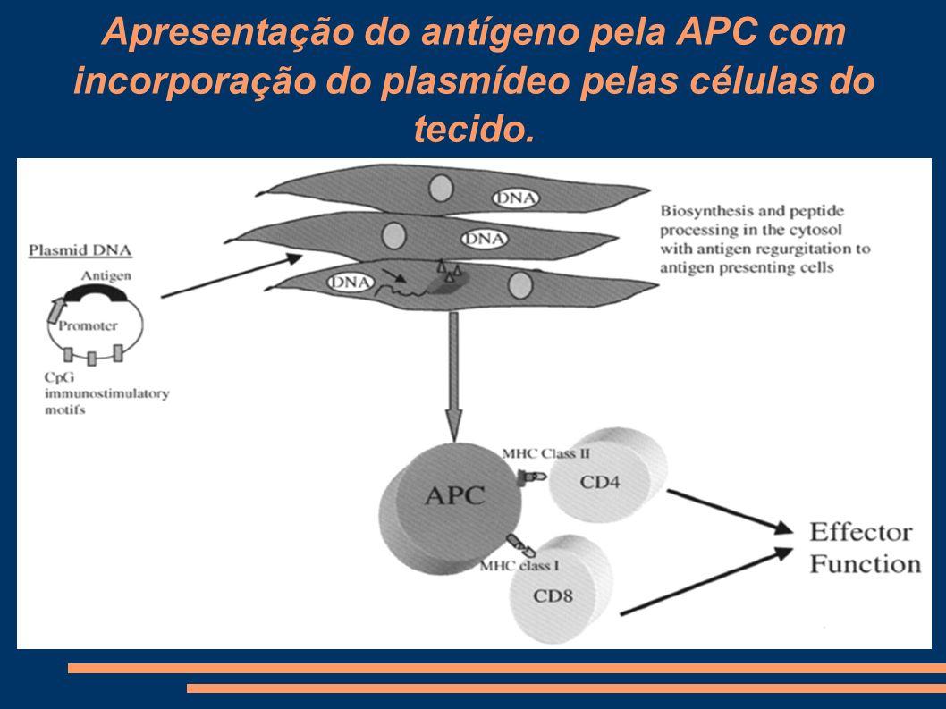Apresentação do antígeno pela APC com incorporação do plasmídeo pelas células do tecido.