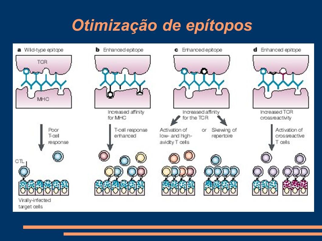 Otimização de epítopos