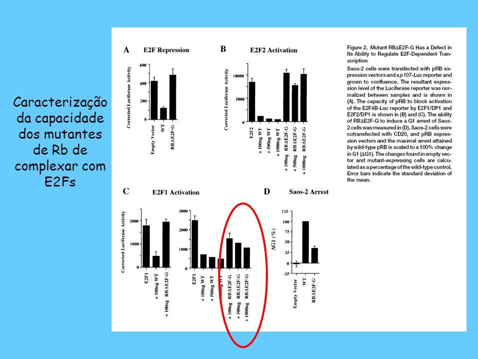 Caracterização da capacidade dos mutantes de Rb de complexar com E2Fs