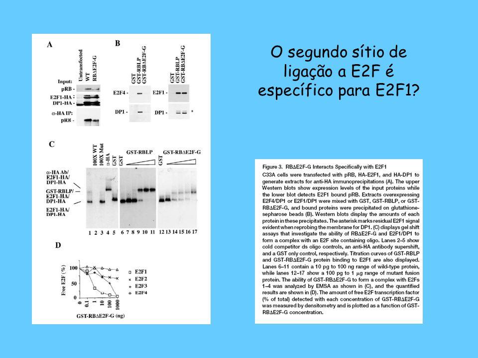 O segundo sítio de ligação a E2F é específico para E2F1