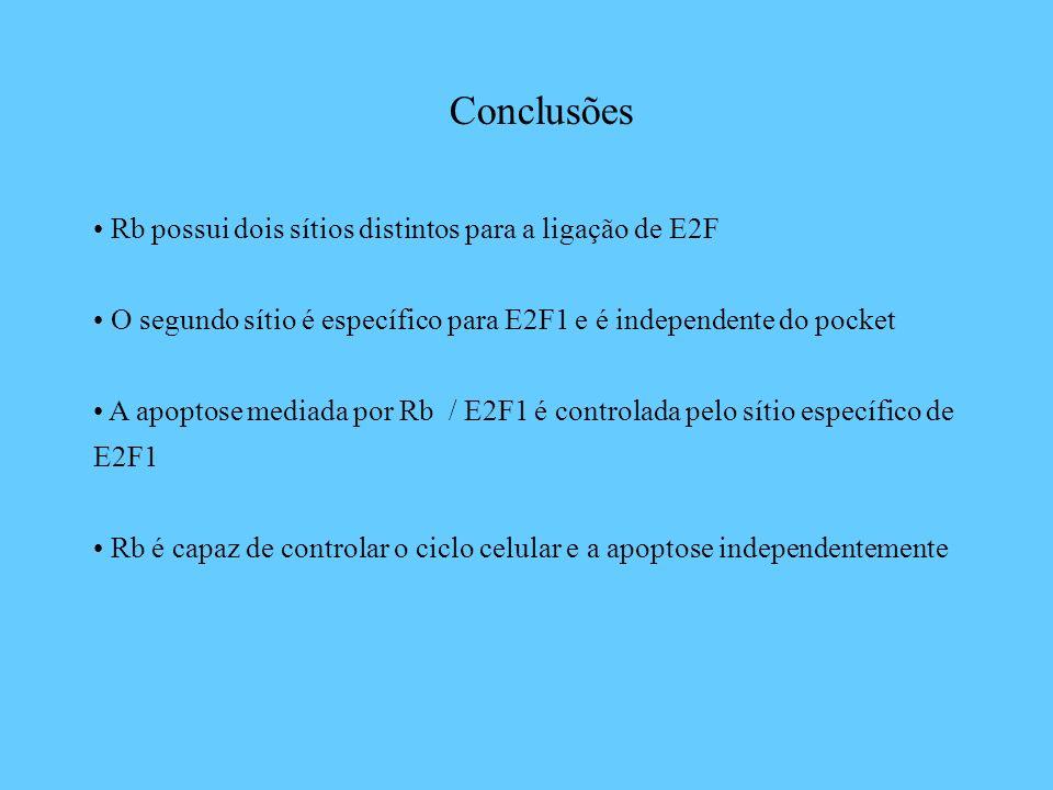 Conclusões Rb possui dois sítios distintos para a ligação de E2F