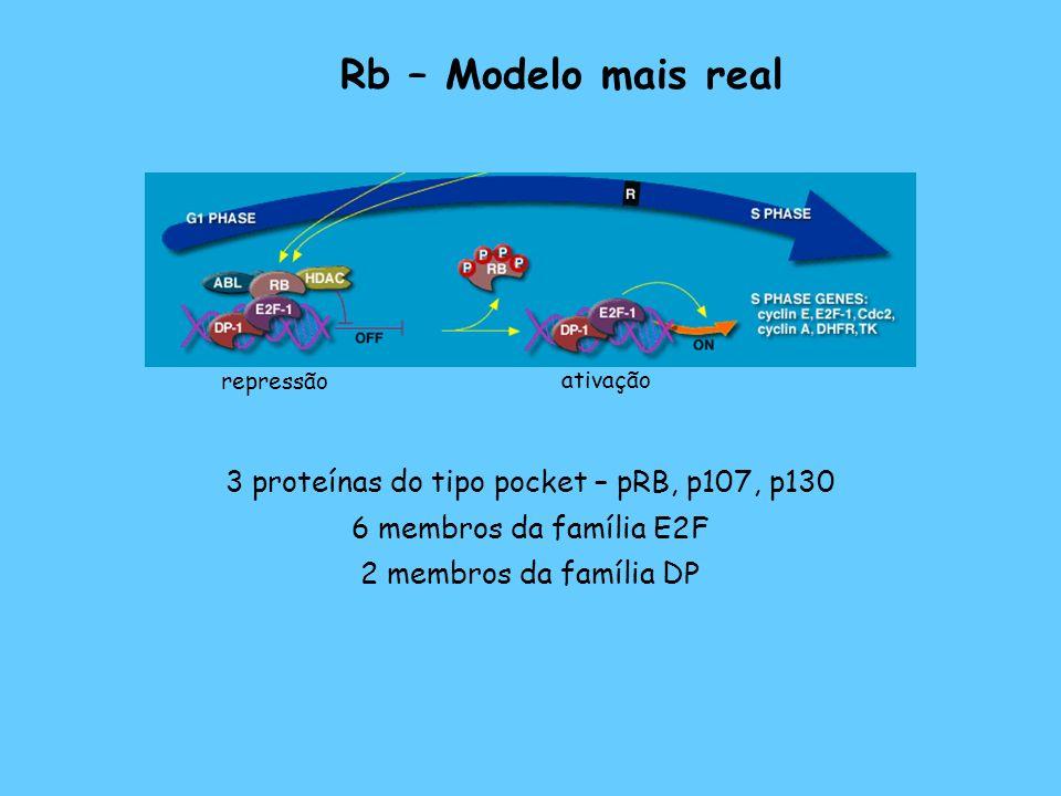 3 proteínas do tipo pocket – pRB, p107, p130