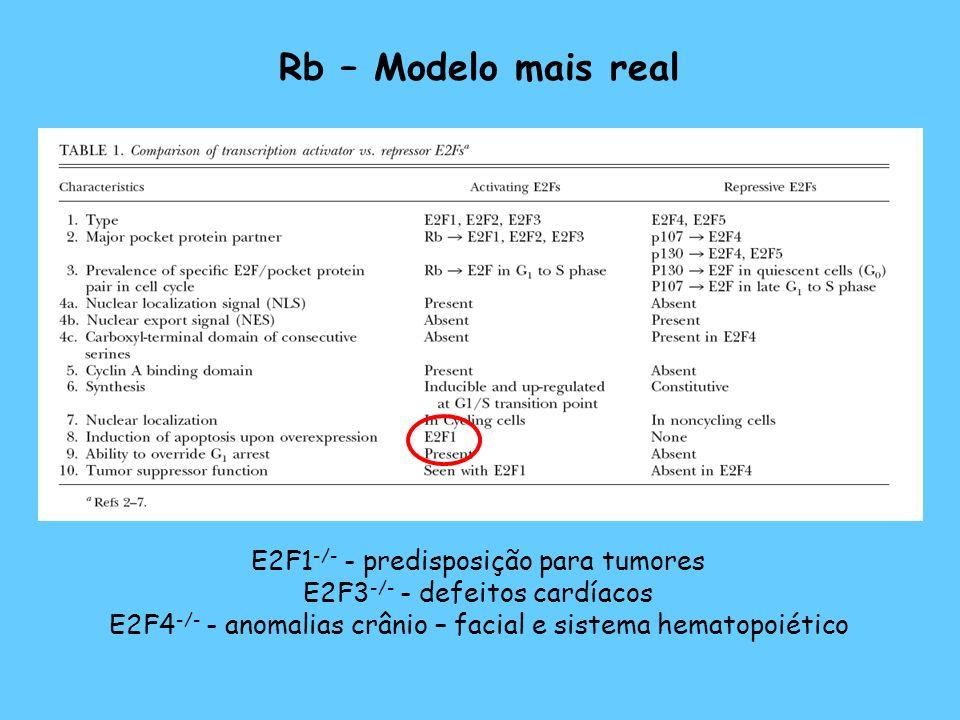 Rb – Modelo mais real E2F1-/- - predisposição para tumores