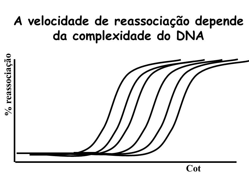 A velocidade de reassociação depende da complexidade do DNA
